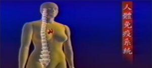 人體免疫系統是如何運作